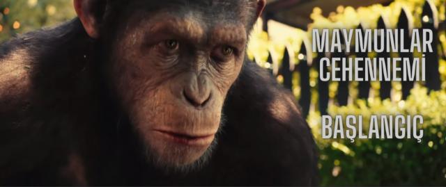 Maymunlar Cehennemi-Başlangıç